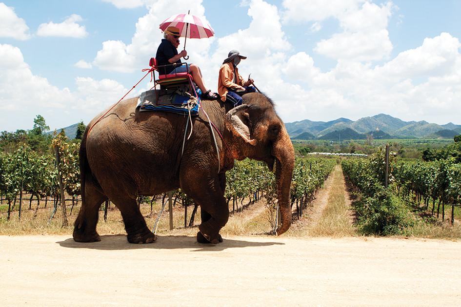 Passeio de elefante pelos vinhedos da vinícola Monsoon Valley (Hua Hin Hills)