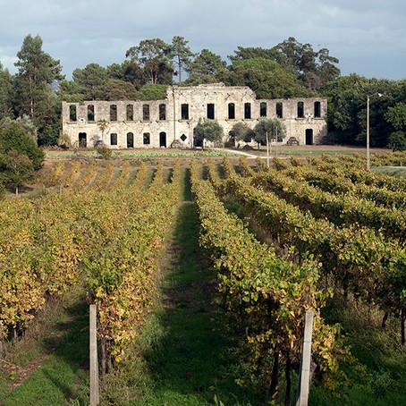 Os vinhos verdes de Portugal