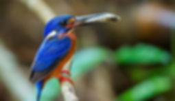 Birds in Khao Sok National Park