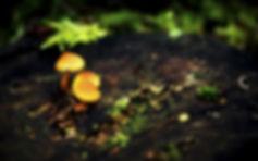 Mushroom-Wallpaper-020.jpg