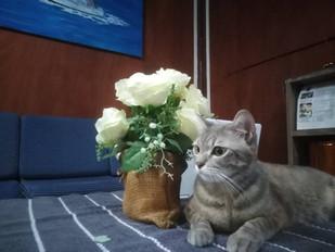 BB's Cat (JJ)