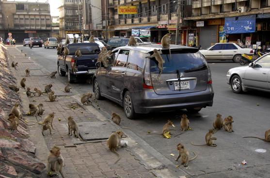 monkeytown-14.jpg