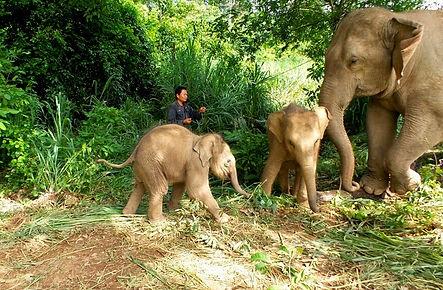 เขตรักษาพันธุ์สัตว์ป่าซับลังกา