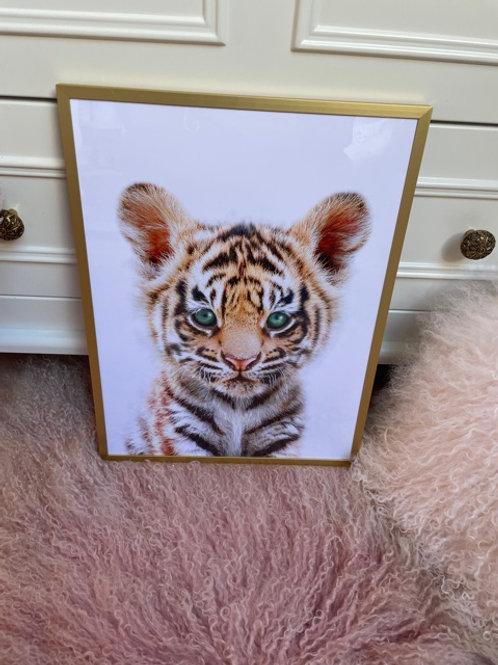 Frame Baby Tiger