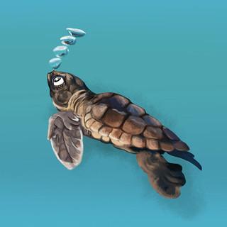 turtle bubble.jpg