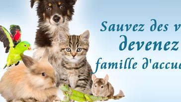 Recherche familles d'accueil !!!