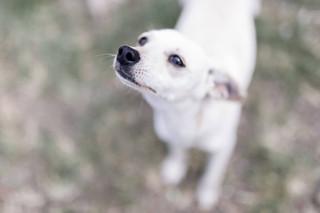 Nico à l'adoption...
