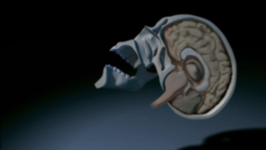 MRP-BrainSagittal_banner_01.jpg