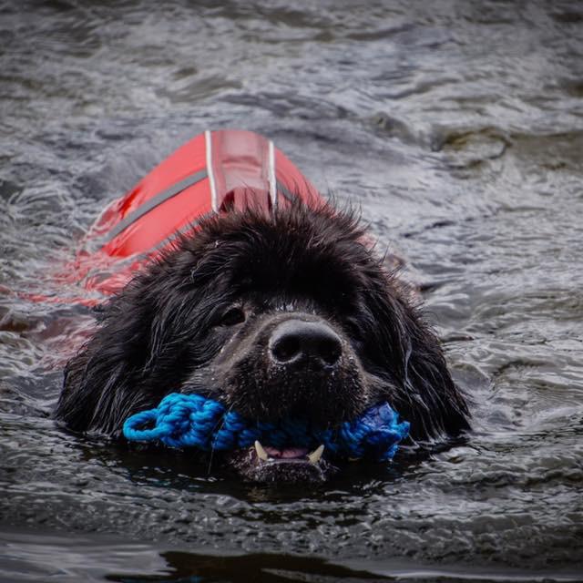 RVTG Water Training