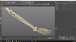 ENT_fibula_3Dprocess_NeuroVasc_01
