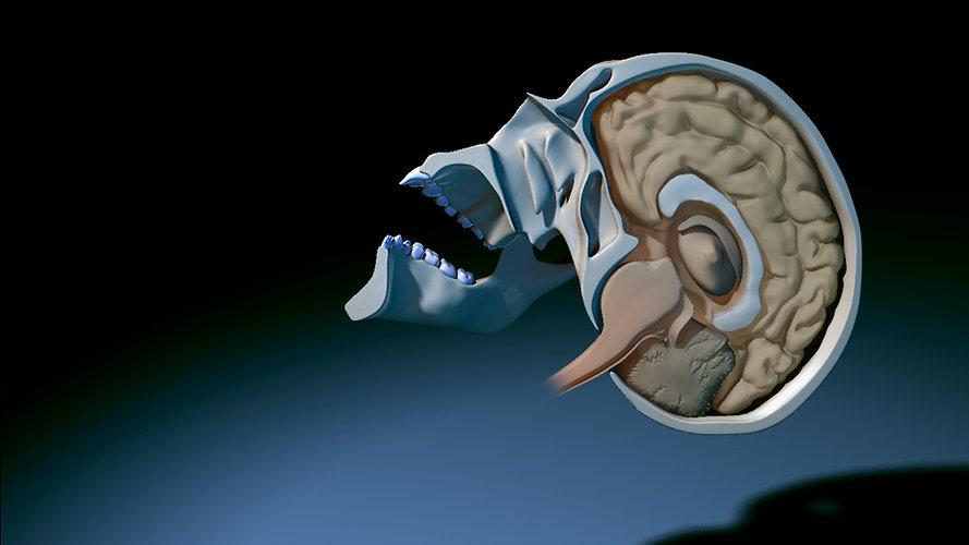 MRP-BrainSagittal_banner_02.jpg