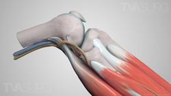 ENT lower leg anatomy