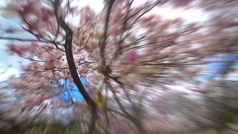 """Um die Baumpflanzaktion für blühende Bäume im Kölner Stadtgebiet """"Meine blühende Stadt"""" zu unterstützen, haben Sängerin Adrienne Morgan Hammond und der Kölner Künstler Armin Scheid einen Song entwickelt. Das Musikvideo dazu wurde von LIEBE DEINE WELT, Köln, realisiert."""