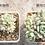 Thumbnail: FP001 | Fertilizing 施肥 | A2多肉缓释肥 | A2 Succulent Slow Realease Fertilizer | 250g