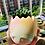 Thumbnail: TG0010 流釉蛋壳