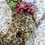 Thumbnail: PS019 | Spagmoss Classic Dried 干水苔 | Succulent DIY | Phalaenopsis Orchid | 12L