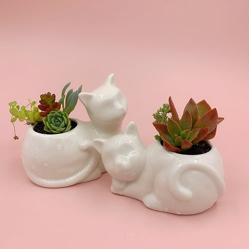 SA013 | Succulent Arrangement | a set of cats succulent arrangement