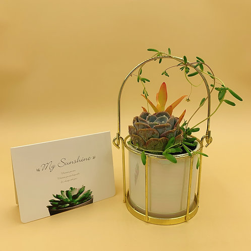 SA008 | Succulent Arrangement | Gift | wedding | decor | nordic minimalist gift