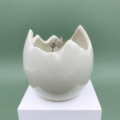 GP173 | glazed pots | minimalist style | white egg succulent pot