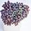 Thumbnail: SU027 |   姬星美人 Sedum dasyphyllum