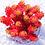 Thumbnail: SU0114 | 红色浆果  Sedum rubrotinctum'Redberry'