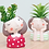 Thumbnail: RS006  | Resin Pots | succulent pot | Girls | 4 Types