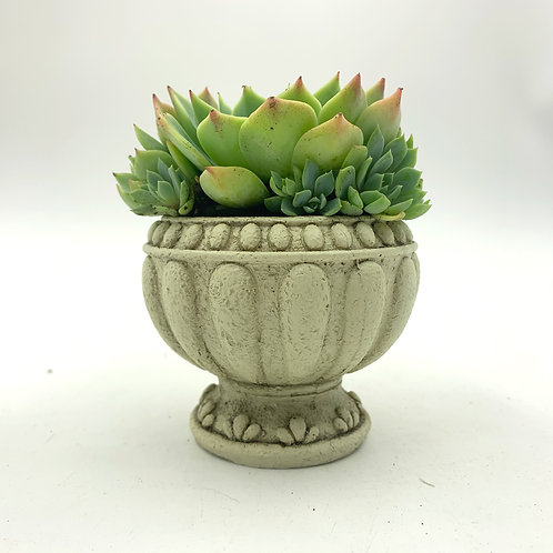 SA003 | Succulent Arrangement | Gift | wedding | decor | Torch