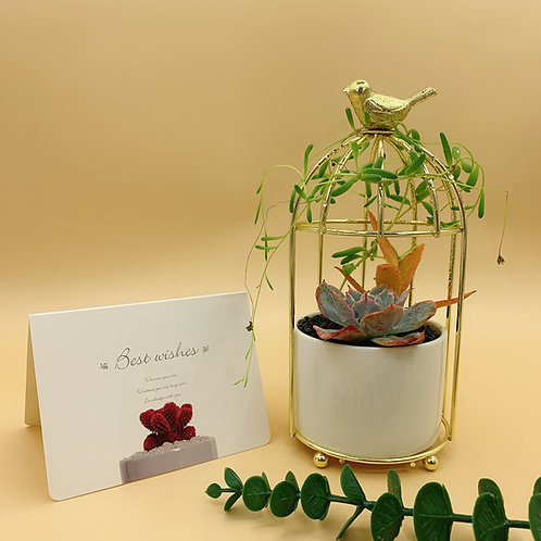 SA009 | Succulent Arrangement  | Gift | wedding | decor | nordic bird gift