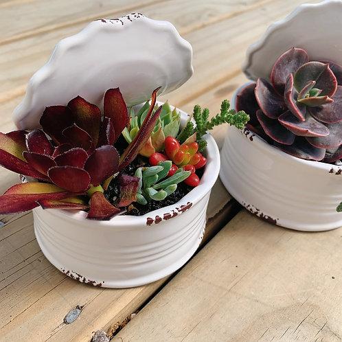 SA013 | Succulent Arrangement | can succulent arrangement