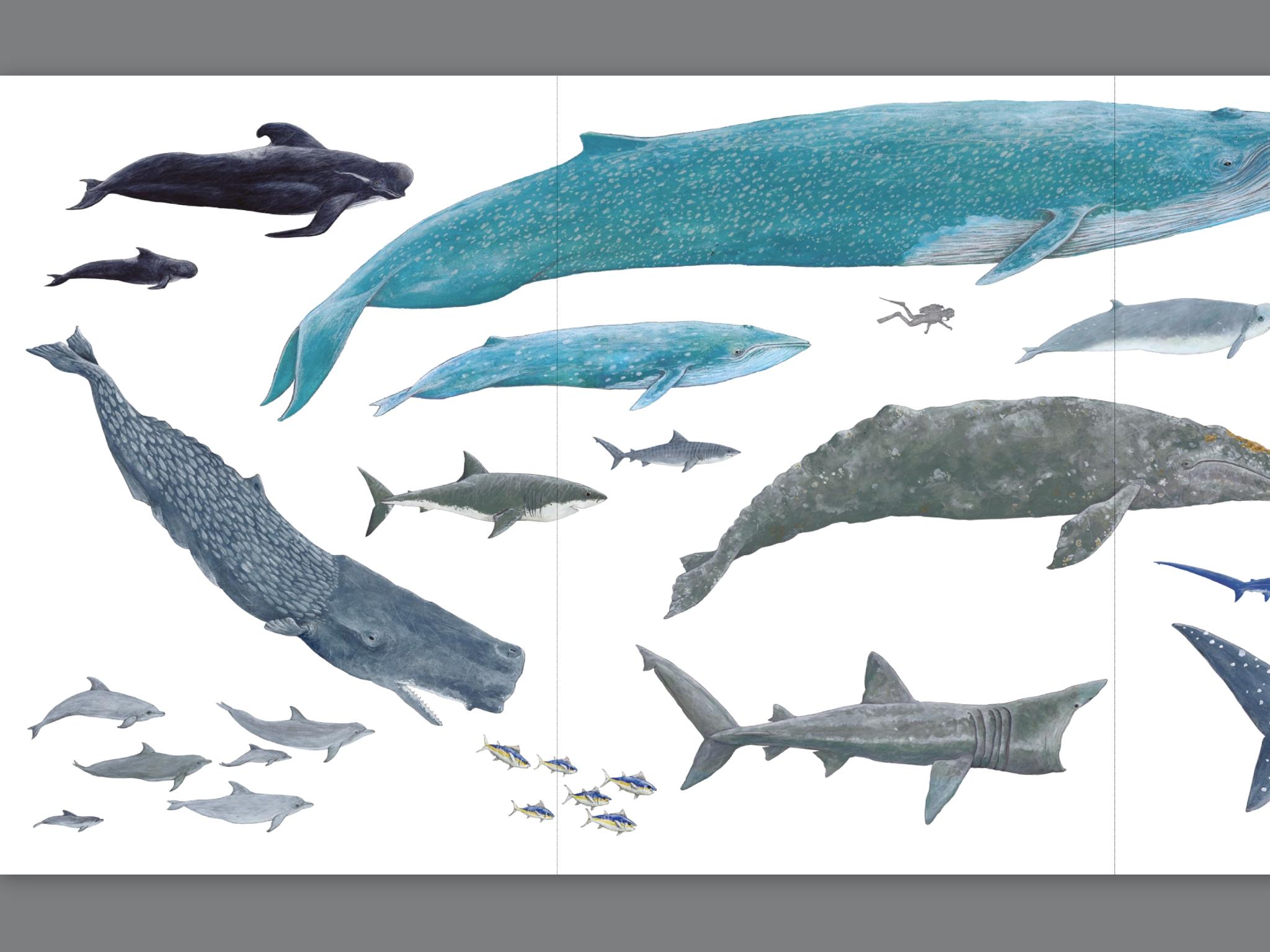 Géants des mers 1
