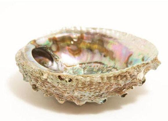 """Smudge Burner - Abalone Shell - Large 5""""-6.5"""""""