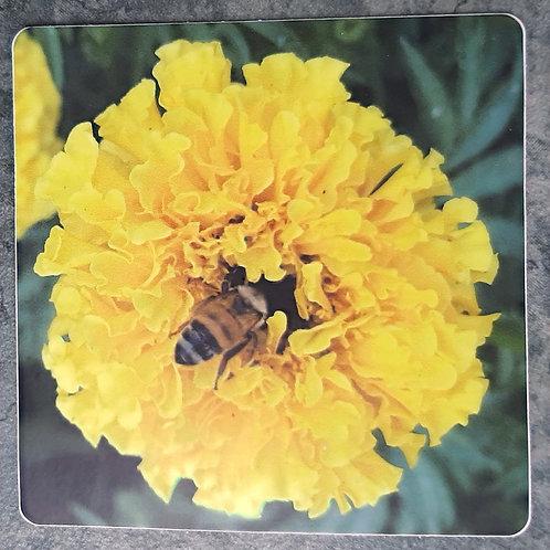 Marigold Bee Bum