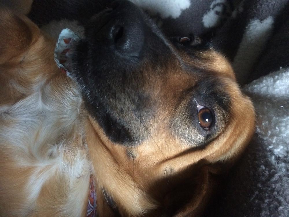 Best dog Nellie