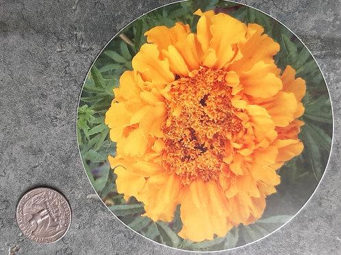 Marigold Sticker 2
