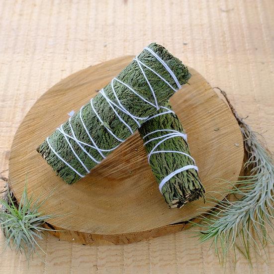 雪松 Cedar