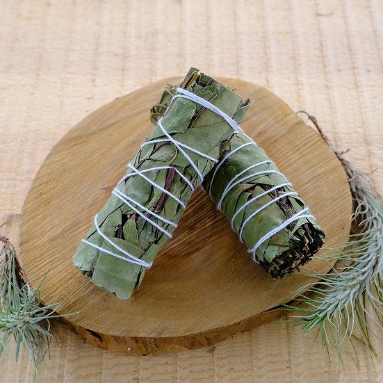 尤加利 Eucalyptus