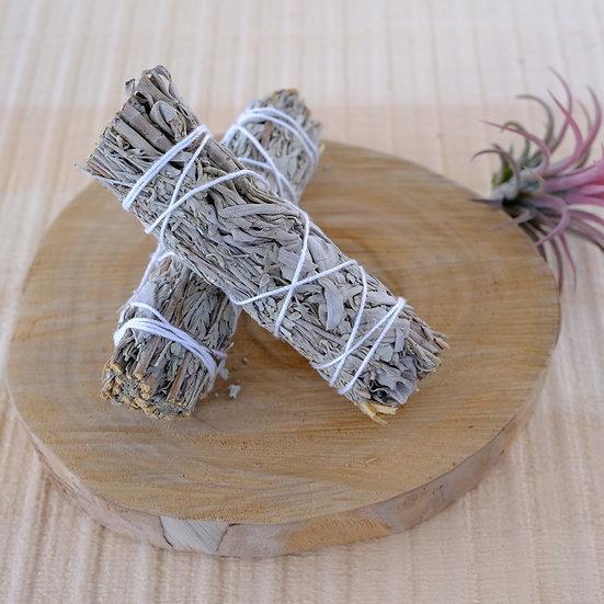 白鼠尾草 X 藍鼠尾草 White Sage X Blue Sage (Salvia Farinacea)