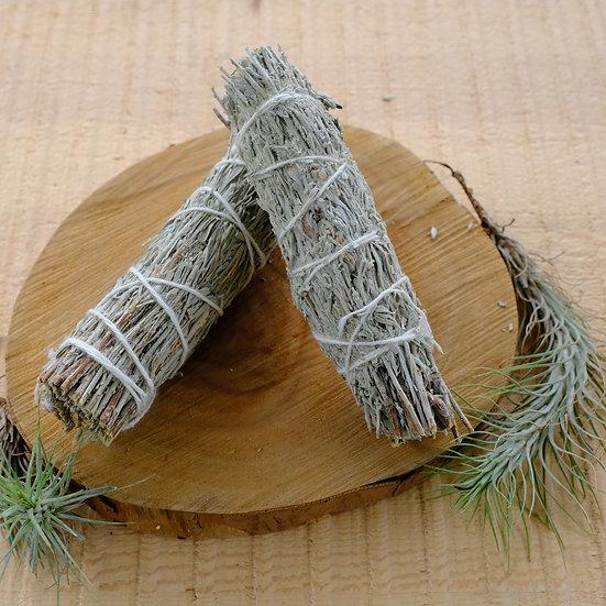 療癒鼠尾草 Healing Sage