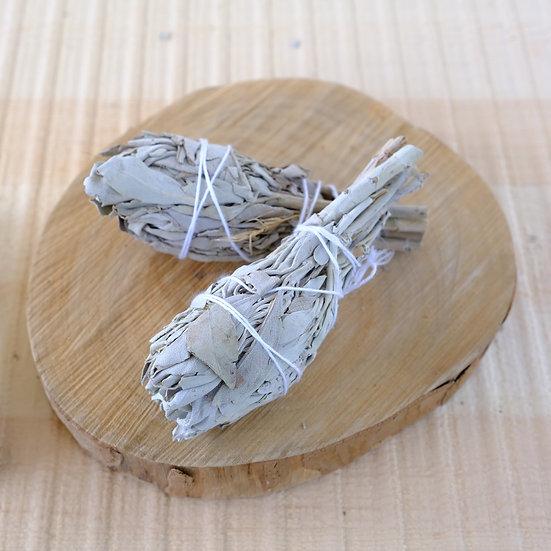 白鼠尾草(小) White Sage (Small)