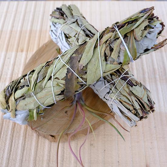 北美聖草 X 白鼠尾草 (大) Yerba Santa X White Sage (Large)