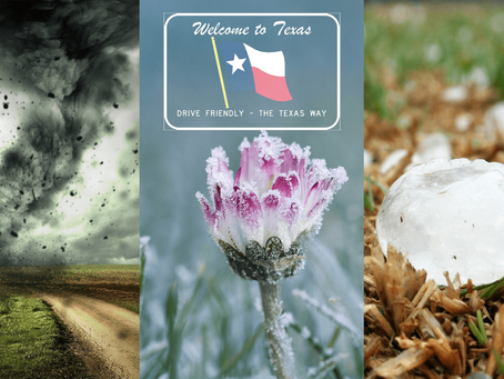 Cool Casa's Guide to Spring in Rockwall | Rockwall, Texas