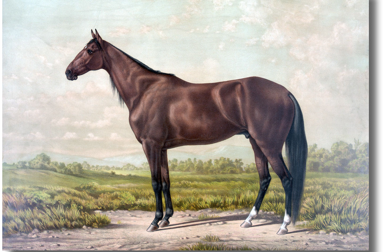 horse-portrait-painting.jpg