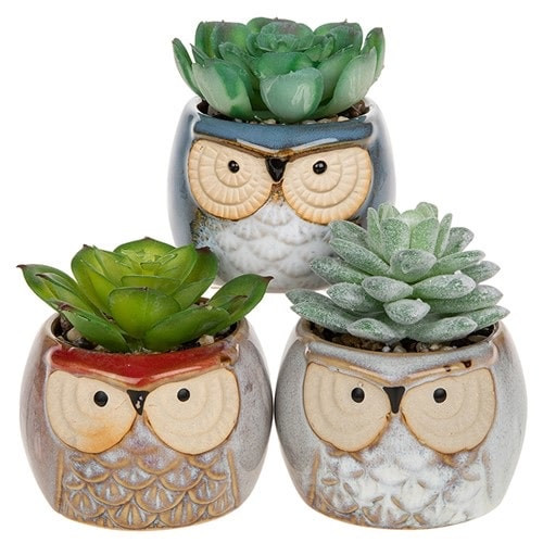 succulents in owl pots
