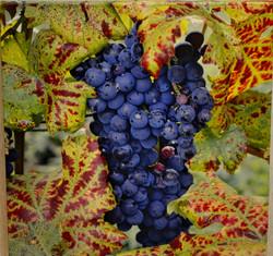 """Grapes  24"""" x 24"""" by Tom Mackie"""