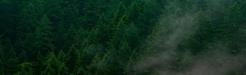 big-green-clash-forest-bg.jpg