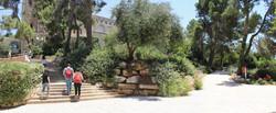 Panorama_2.JPG