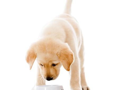 Check the dog food