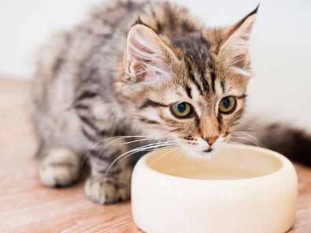 Pet's bowl