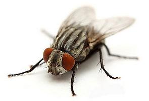 HPC Cluster Fly.jpg