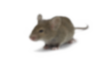 HPC-House-Mice.png